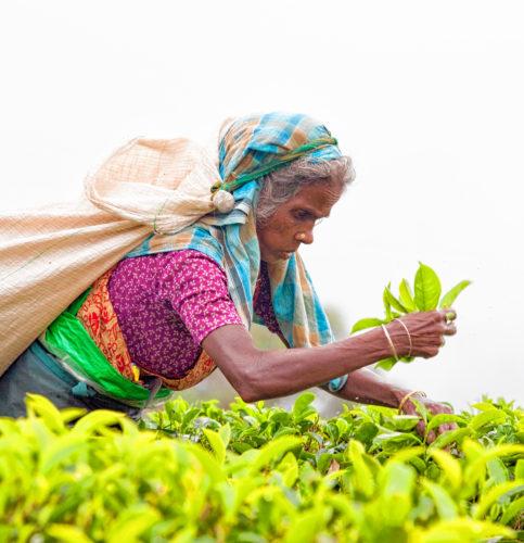 Fairtrade: Guter Lohn für harte Arbeit. Foto: i-stock