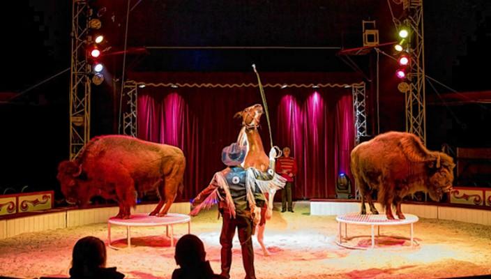 Tolle Tierdressur im Circus Crocofant.
