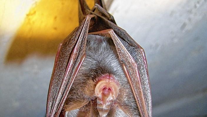 Fledermäuse sind faszinierende Tiere. Foto: re