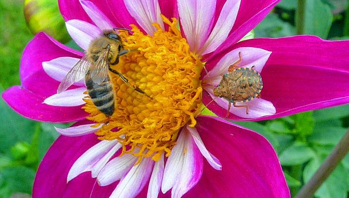 Insektentreffen am gedeckten Tisch.