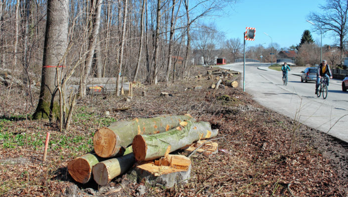 Für die gefällten Bäume wird es nach Abschluss der Baumaßnahmen Ersatzpflanzungen geben. Foto: nu
