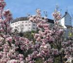 """Ein traumhafter, frühlingshafter Anblick: Das Schloss Hohenaschau. In der Galerie an der Festhalle geht das ,,Fest der Farben"""" weiter mit der Ausstellung der Wiener Malerin Joanna Gleich. Foto: H.Reiter"""