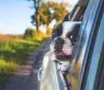 Unterwegs mit Hund - aber bitte gut gesichert! Foto: pixabay
