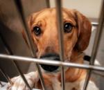 Viele Tiere warten auf Ihre Hilfe. Foto: i-stock