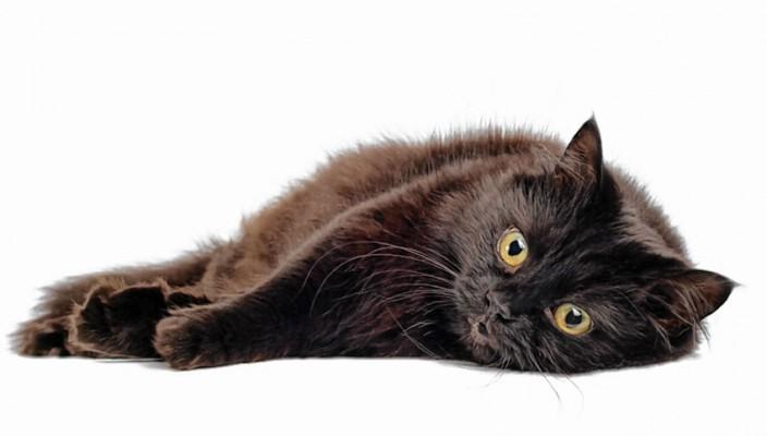 Freitag, der 13., und schwarze Katzen müssen nicht unbedingt Unglück bringen – sie können sogar wahre Glücksbringer sein. Foto: i-stock