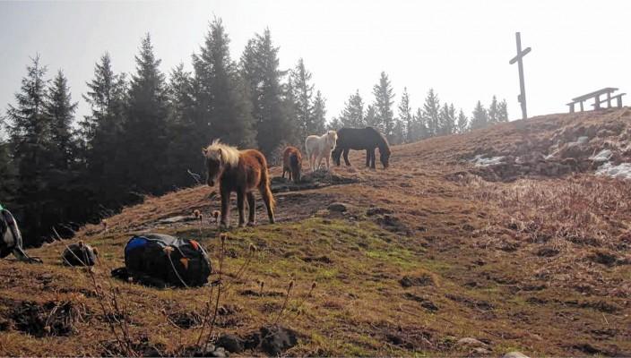 Wohlbehalten wurden die vier Ponys unterhalb des Sulzberggipfels wiedergefunden.