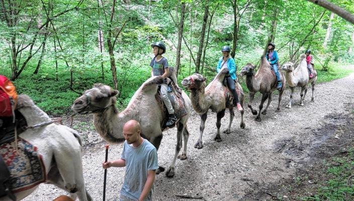 Hoch zu Kamel ging es zum Ausritt. Foto: re
