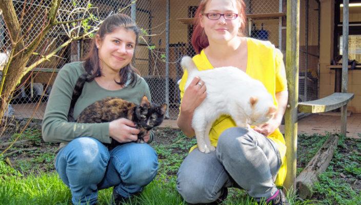 Im Tierheim, das rund um die Uhr für Notfälle erreichbar ist, werden pro Jahr rund 120 Fundkatzen abgegeben. Liebevoll kümmern sich die beiden Tierpflegerinnen Rabea Dib (links) und Martina Lötzsch um sie.