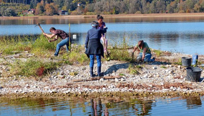 Mit ihrer Aktion halfen die Freiwilligen, den Lebensraum der Vögel zu erhalten.