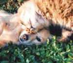 Tierheime kümmern sich um viele Kreaturen, denen es nicht so gut geht, wie diesen Vierbeinern. Foto: pixabay
