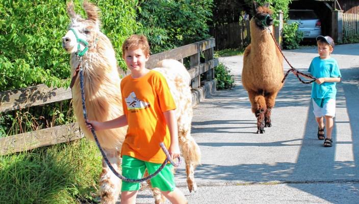 Einmal ein Lama durch die Stadt führen, für die Gewinner unserer Verlosungsaktion wird dieser Wunsch wahr.